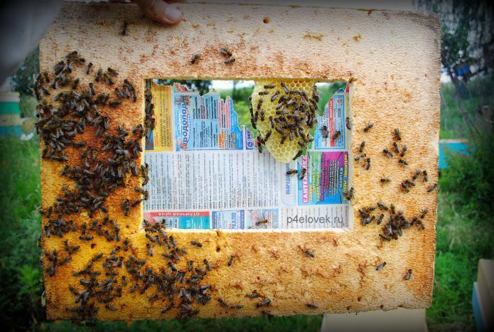 Весеннее и осеннее объединение пчелиных семей