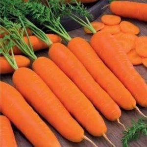 Морковь император: подробное описание сорта, отличие от других разновидностей, преимущества и недостатки, выращивание, сбор и хранение урожая, болезни и вредители