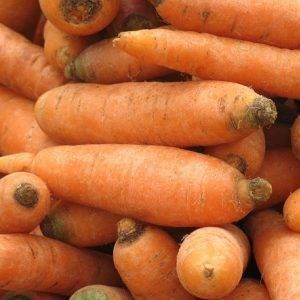 Любимица отечественных овощеводов — морковь витаминная 6. подробная характеристика и особенности выращивания