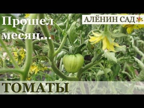 «сержант пеппер» – американские томаты на службе вашего огорода