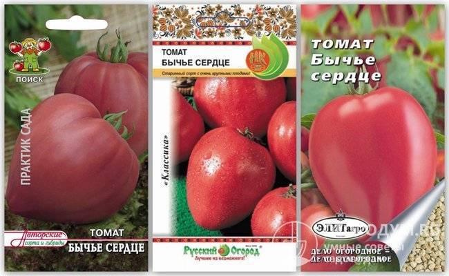 Есть чему удивиться – сорт томата «бычье сердце»: фото, описание и основные характеристики помидора-гиганта