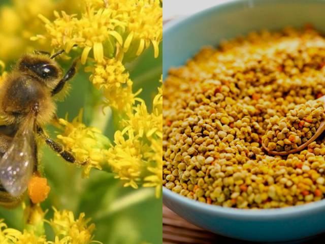 Польза пыльцы пчелиной для женского организма
