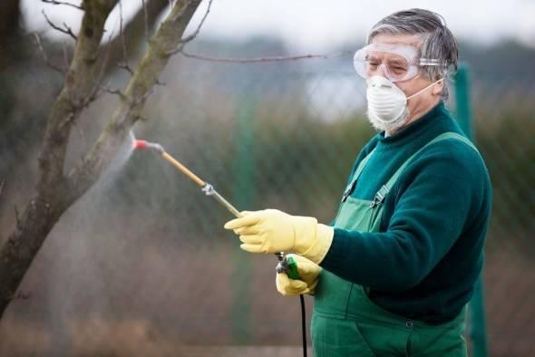Уход за садом осенью: обработка деревьев