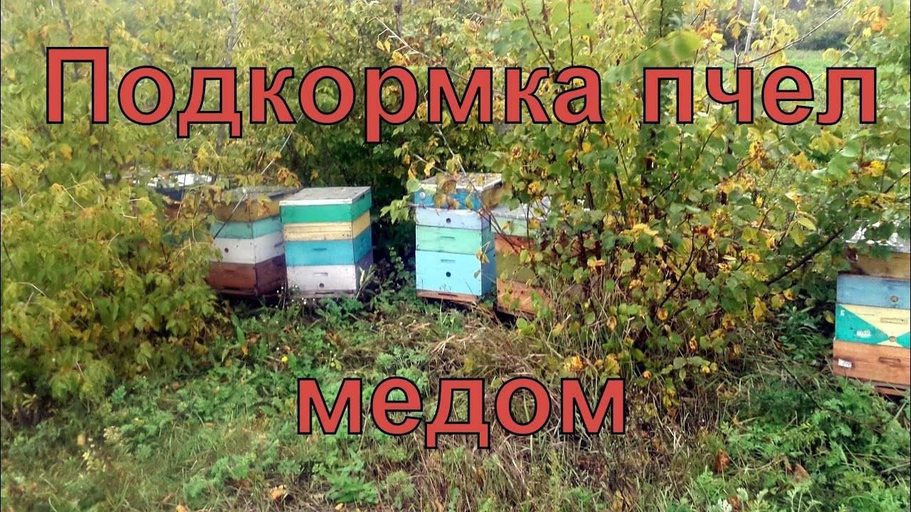 Осенняя подкормка пчёл — когда, чем, как?
