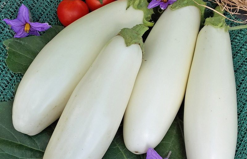 """Как правильно выращивать баклажаны """"вкус грибов"""""""