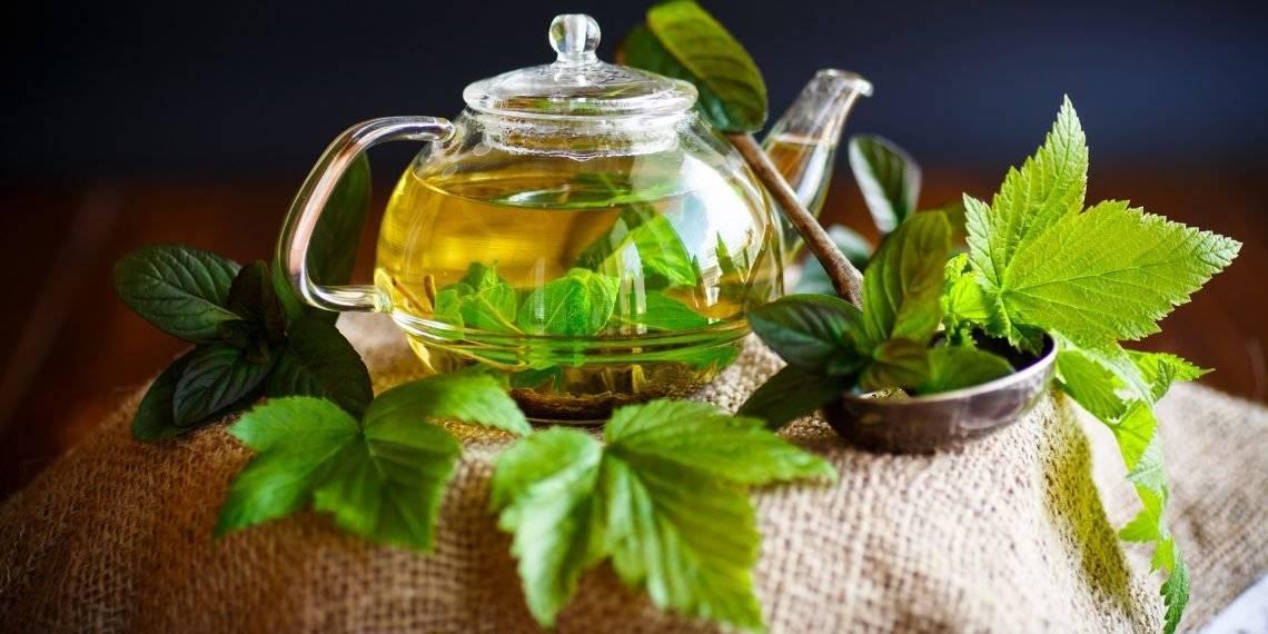 Ферментированный чай из листьев смородины польза и вред