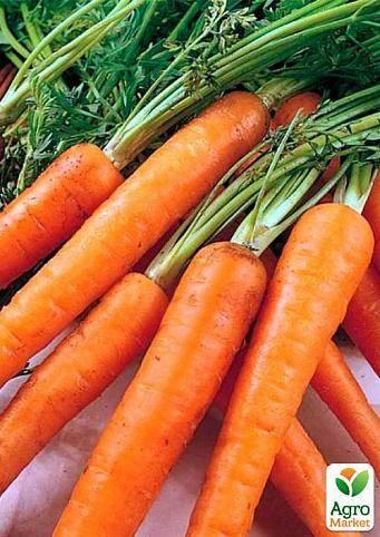 Морковь соломон f1 — описание сорта, фото, отзывы, посадка и уход