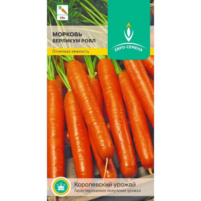 Как ухаживать за морковью берликум роял?