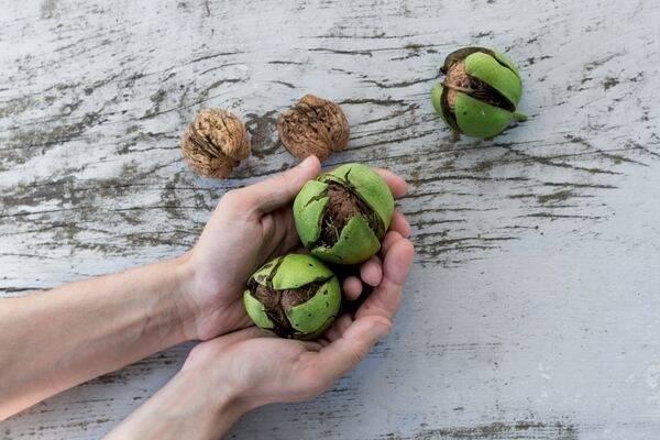 Чем отмыть руки после зелёных грецких орехов