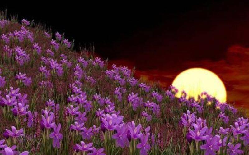 Гороскоп цветовода на месяц