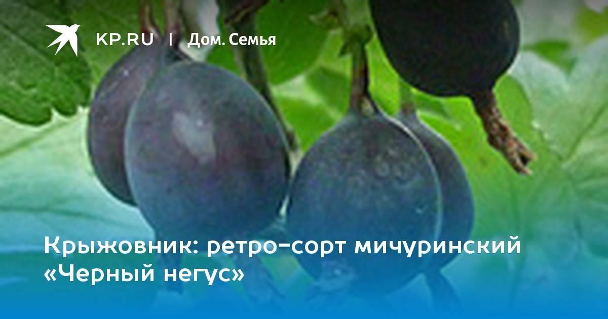 Лучшие сорта крыжовника для регионов россии, украины и беларуси
