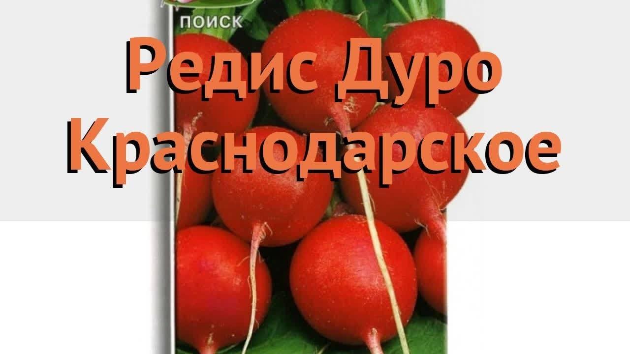 Редис дуро: описание сорта, посадка и выращивание, болезни