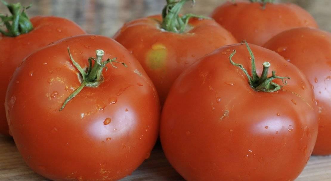 Какие бывают ультраскороспелые сорта помидоров  для открытого грунта?