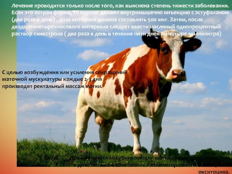 Автореферат и диссертация по ветеринарии (16.00.07) на тему:хроническая субинволюция матки у коров