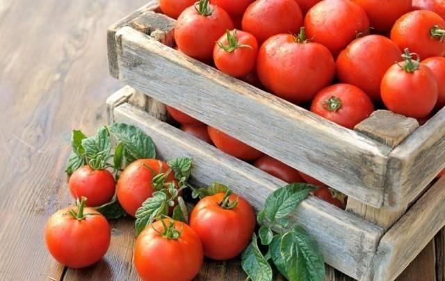 Спасение медной проволокой от фитофторы на помидорах — миф или реальность: полный разбор