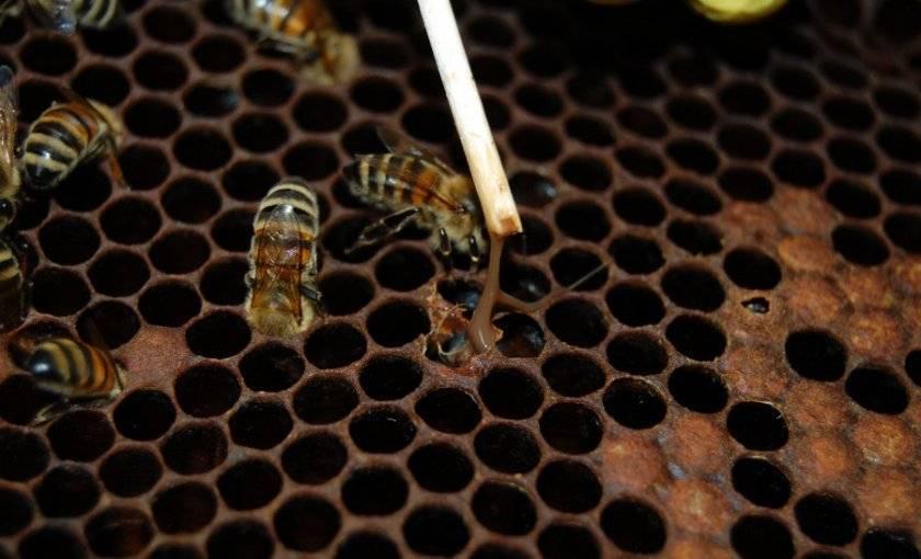 Апимакс — для пчел: инструкция по применению