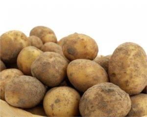 Сорт картофеля «брянский надежный» – описание и фото