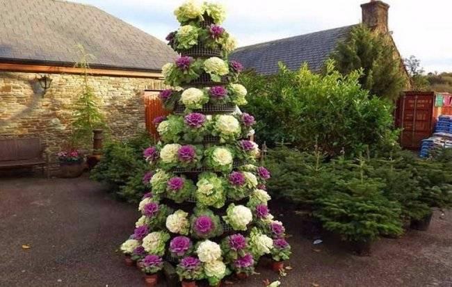 Декоративная капуста: разновидности, особенности выращивания и использование овощной культуры для украшения сада