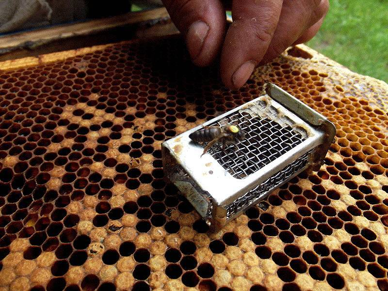 Формирование отводков - начинающему пчеловоду