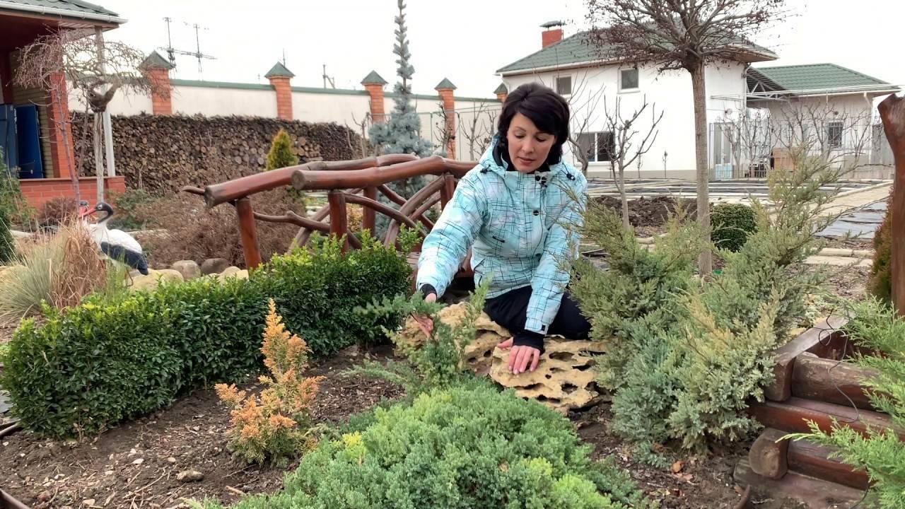 Посадка можжевельника: как сажать его весной в открытый грунт? какую почву он любит? как правильно посадить летом и осенью на участке?