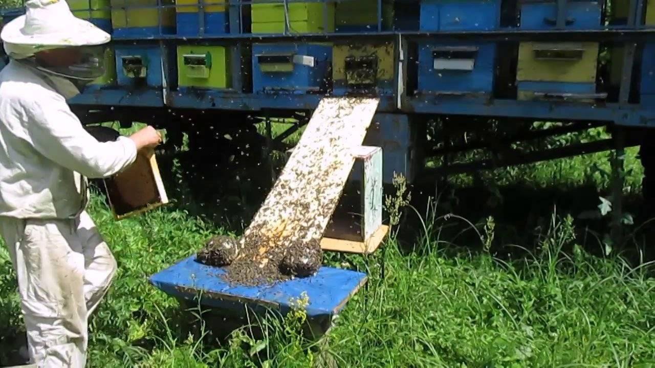 Как избежать роения пчел?
