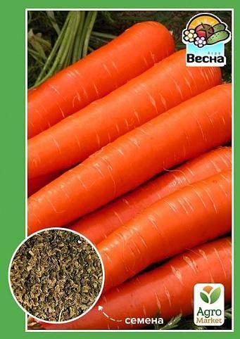 Обзор лучших сортов моркови для выращивания в открытом грунте