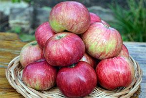 Яблоня жигулевское: правила посадки и уход