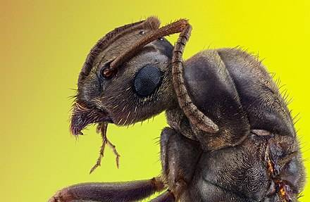 Болезни и вредители пчел