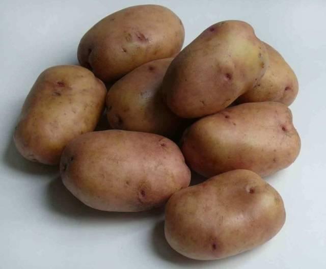 Картофель ермак описание сорта фото отзывы