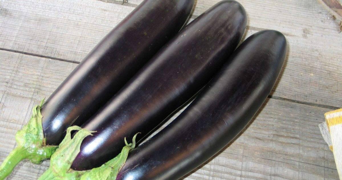 Лучшие сорта баклажанов для теплицы – не капризничают и не горчат