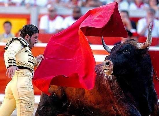 Быки не различают цвета. правда ли, что бык не любит красный цвет