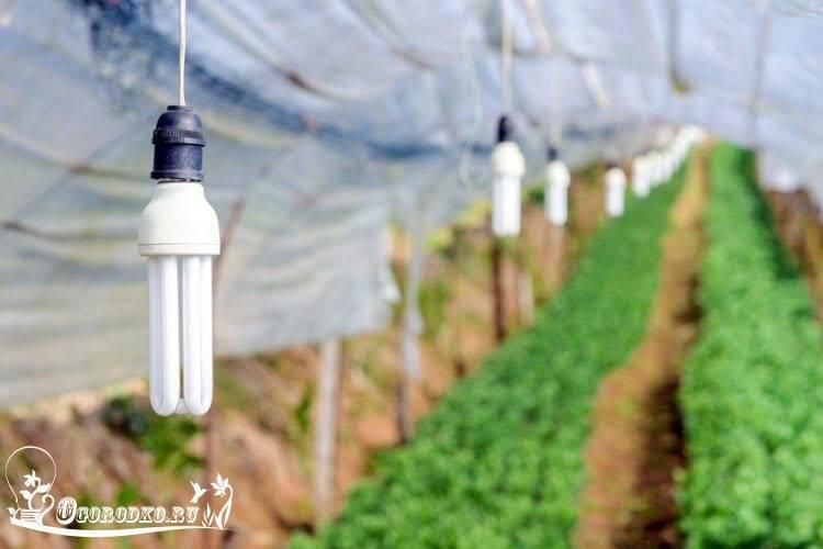 Как правильно подсвечивать рассаду в домашних условиях?
