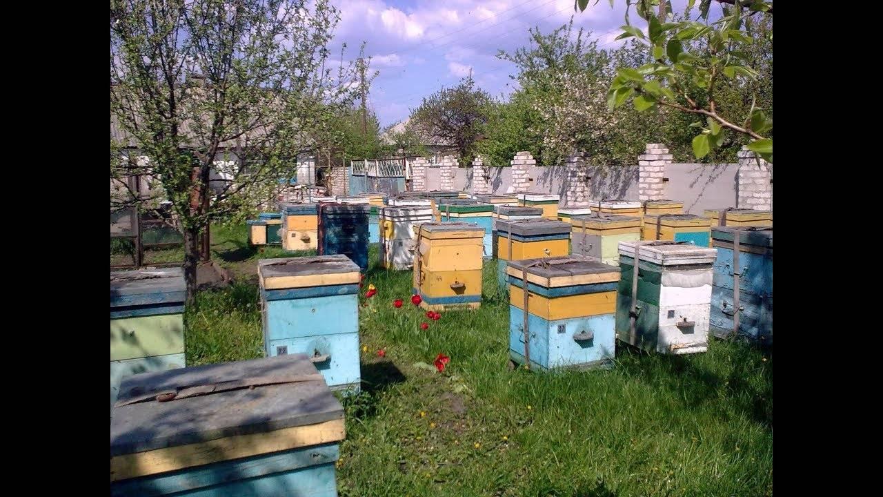 Как происходит зимовка пчел в многокорпусных ульях
