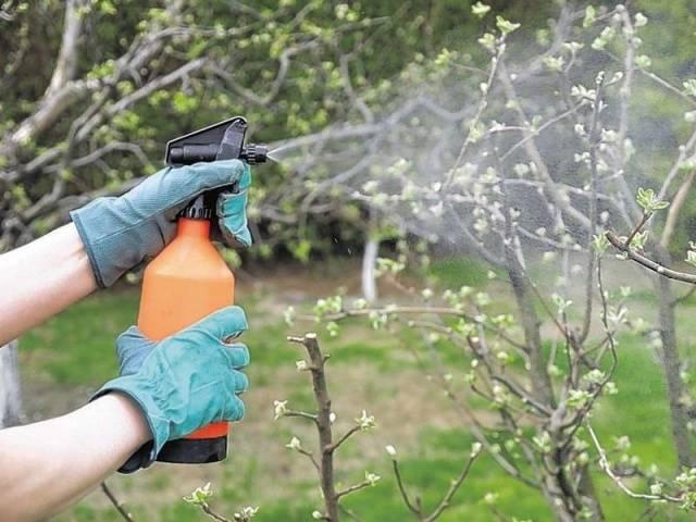 Гроза грибковых болезней – фунгицид фалькон