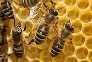 Укус пчелы: первая помощь