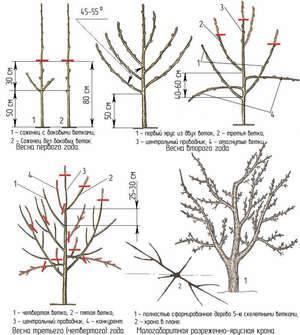 Как правильно обрезать яблони весной — схема