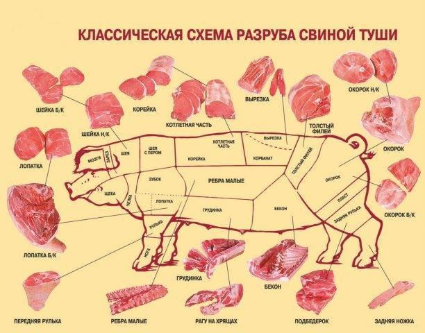 Рулька – это какая часть свиньи (свиной туши)