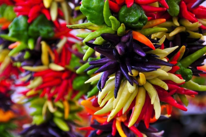 Описание сорта перца рамиро, особенности выращивания и ухода