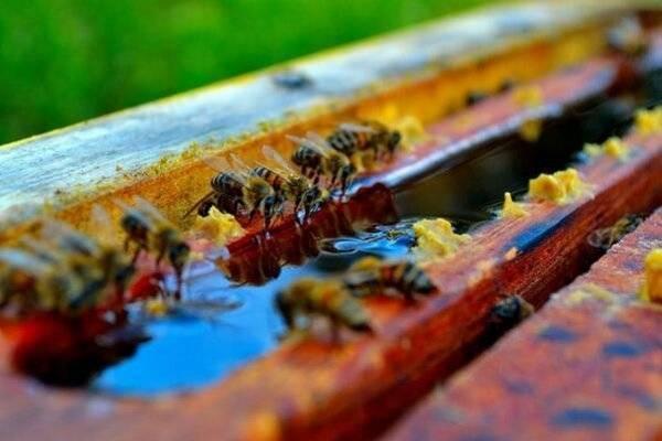 Как подкормить пчел осенью | практическое пчеловодство