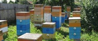 Разведение пчел как бизнес, готовый бизнес проект пчеловодства: как и с чего начать