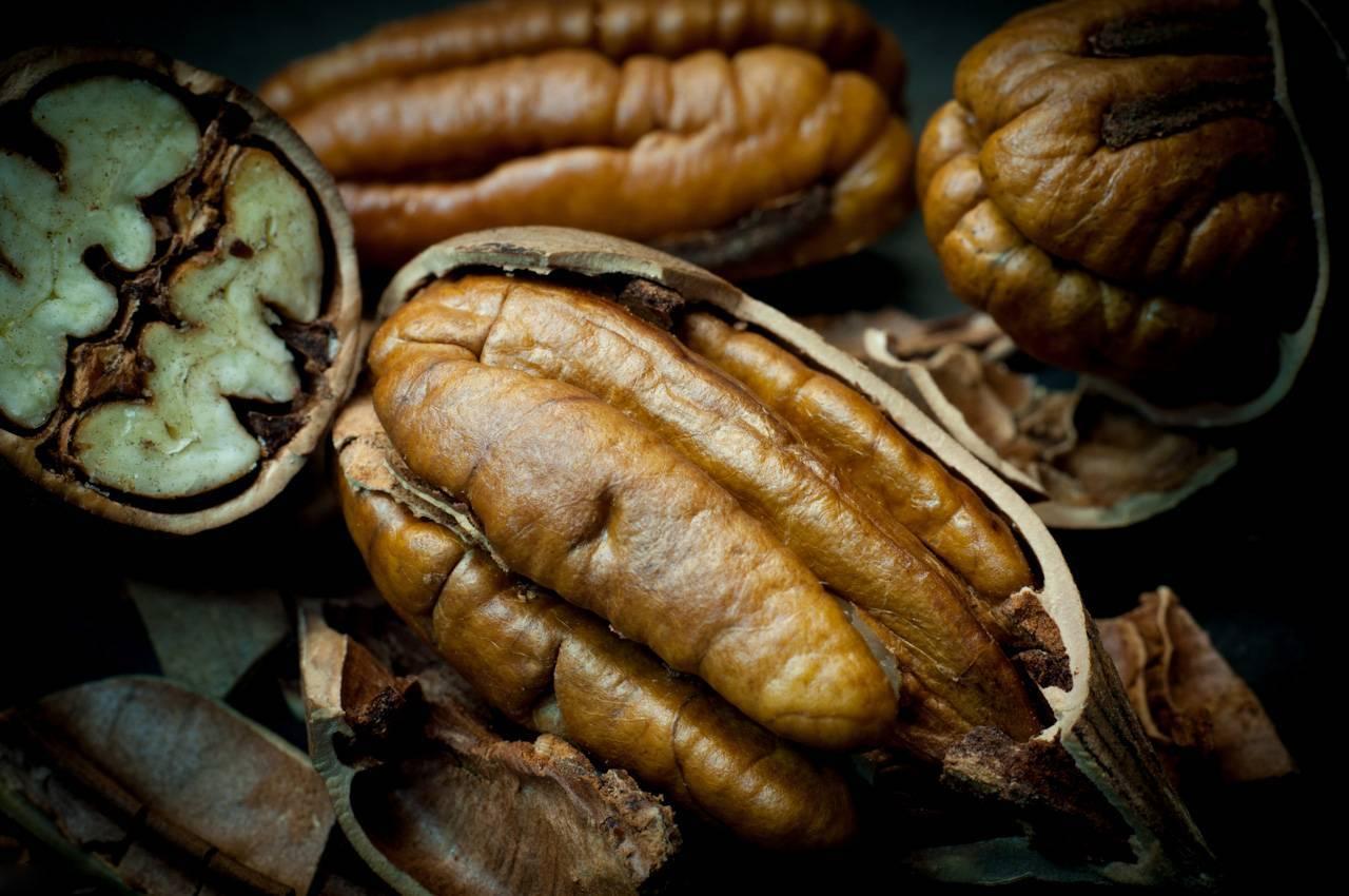 Экзотика в средней полосе: выращиваем пекан