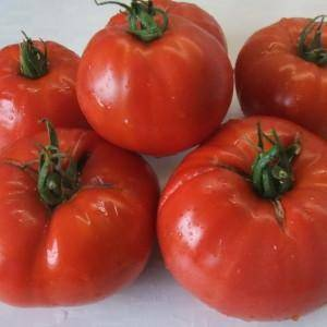 Минусинские сорта томатов: описание, характеристики, фото