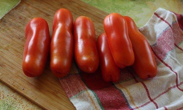 Сорт томата «аурия»: описание, характеристика, посев на рассаду, подкормка, урожайность, фото, видео и самые распространенные болезни томатов