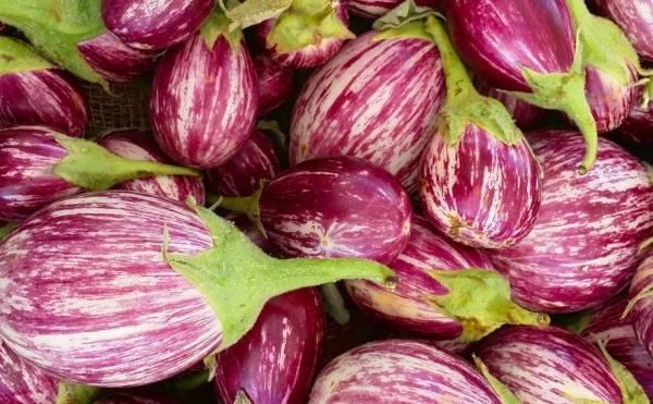 Описание сорта баклажана матросик, его характеристика и урожайность