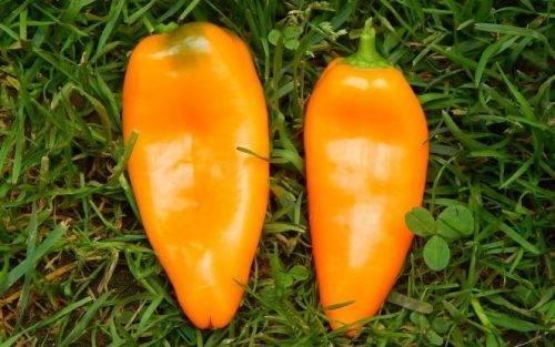 Перец апельсин — описание и характеристика сорта