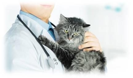 Хламидиоз у животных: диагностика, лечение, карантин на ферме