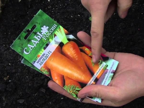 Морковь под зиму — как и когда сажать морковку осенью