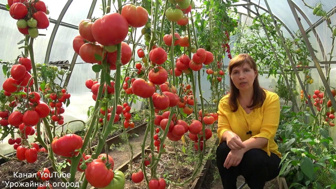 Гордость застолья: описание сорта томата, характеристики помидоров