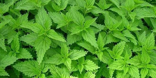 Полезные травы для бани и их свойства