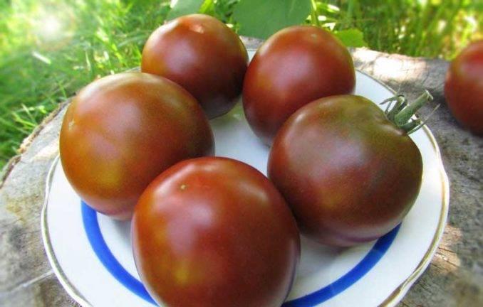 Как вырастить томат черный барон